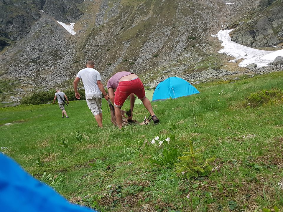 Sistemul, masonii sau iluminatii ucid caprele negre din muntii Rodnei?